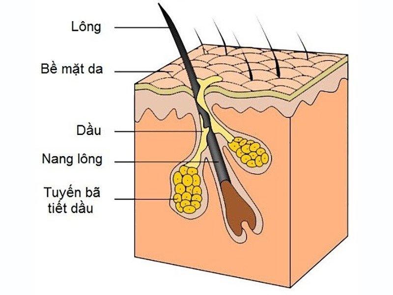 da lão hóa lỗ chân lông to